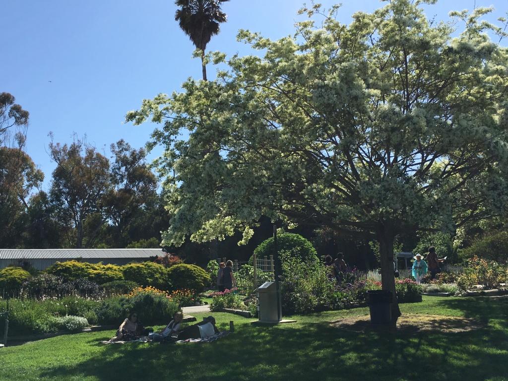 Trees provide shade and beauty.